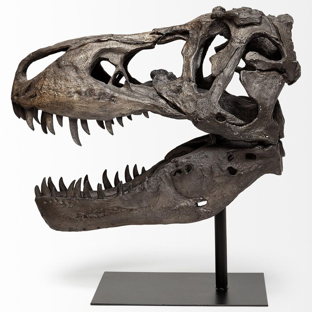 Mercana Lagrane Tyrannosaurus Skull, , large