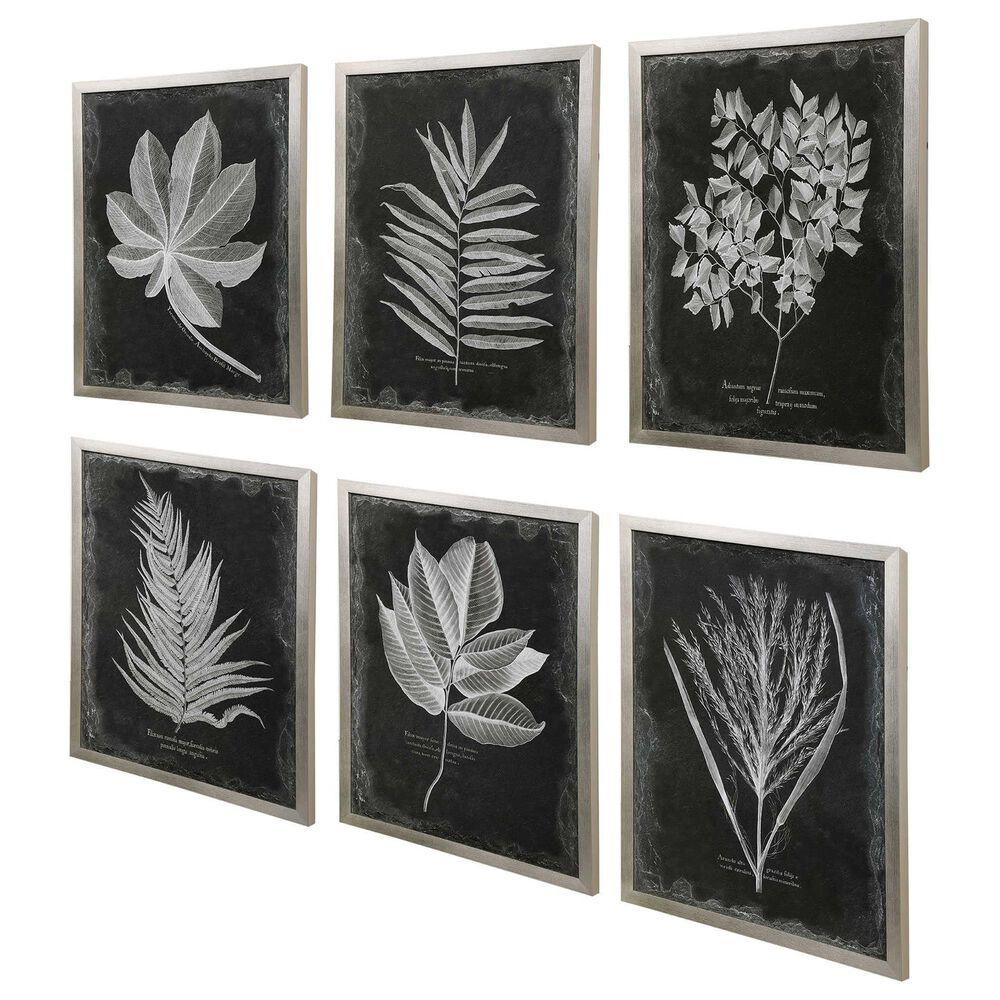 Uttermost Foliage Framed Prints (Set of 6), , large