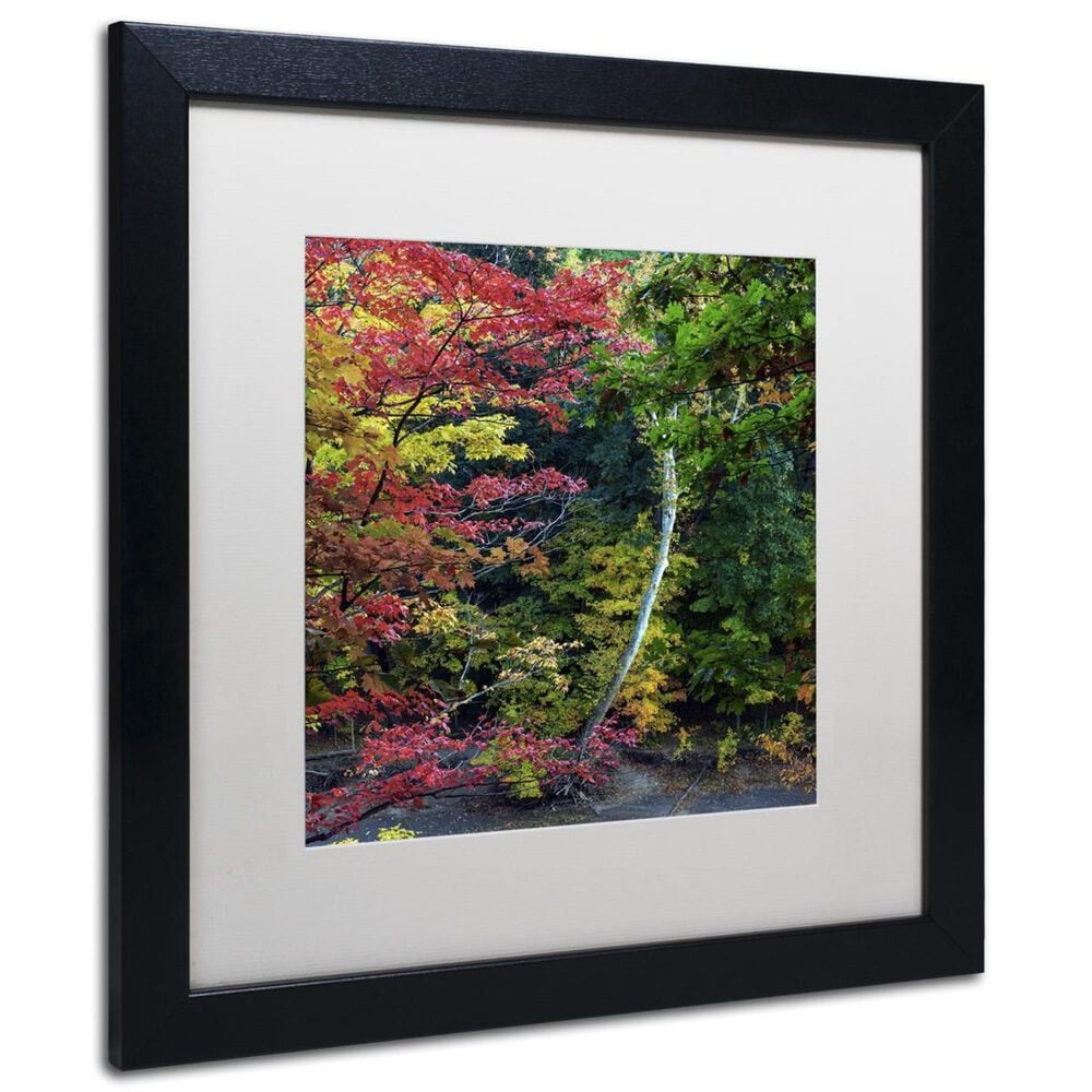"""Timberlake 11"""" x 11"""" All the Colors of October in Ohio Art in White Matting and Black Frame, , large"""