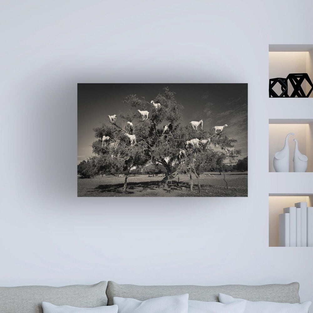 "Timberlake Argan Loving Goats 12"" x 19"" Canvas Art in Grey/Black, , large"