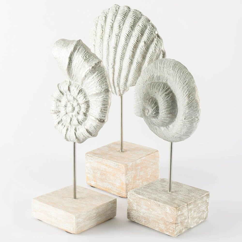 Mercana Coquina Sea Shell Sculpture, , large