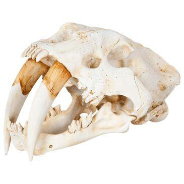 Mercana Fozzil Sabretooth Skull Decor, , large