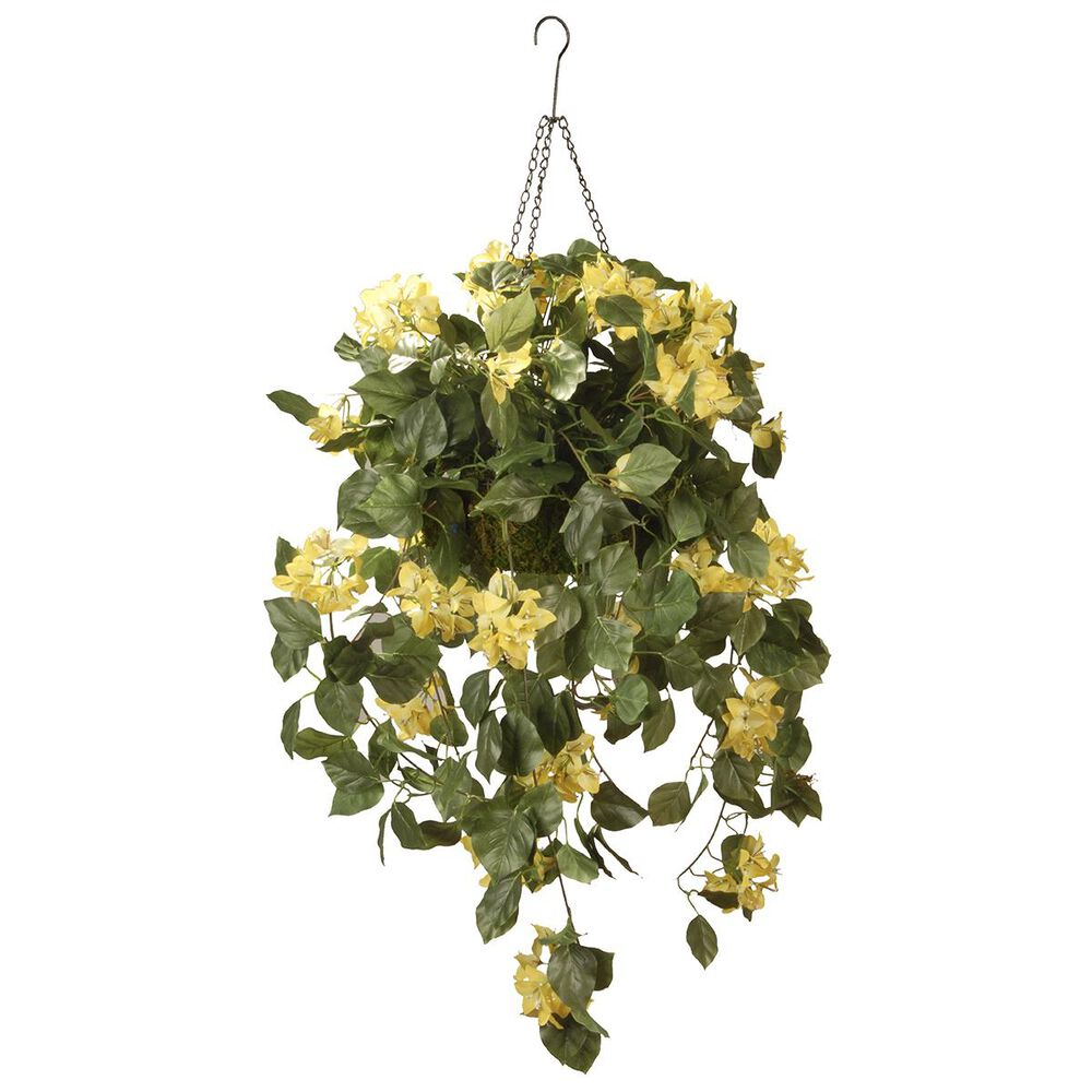 "National Tree 14"" Bougainvillea in Hanging Basket, , large"