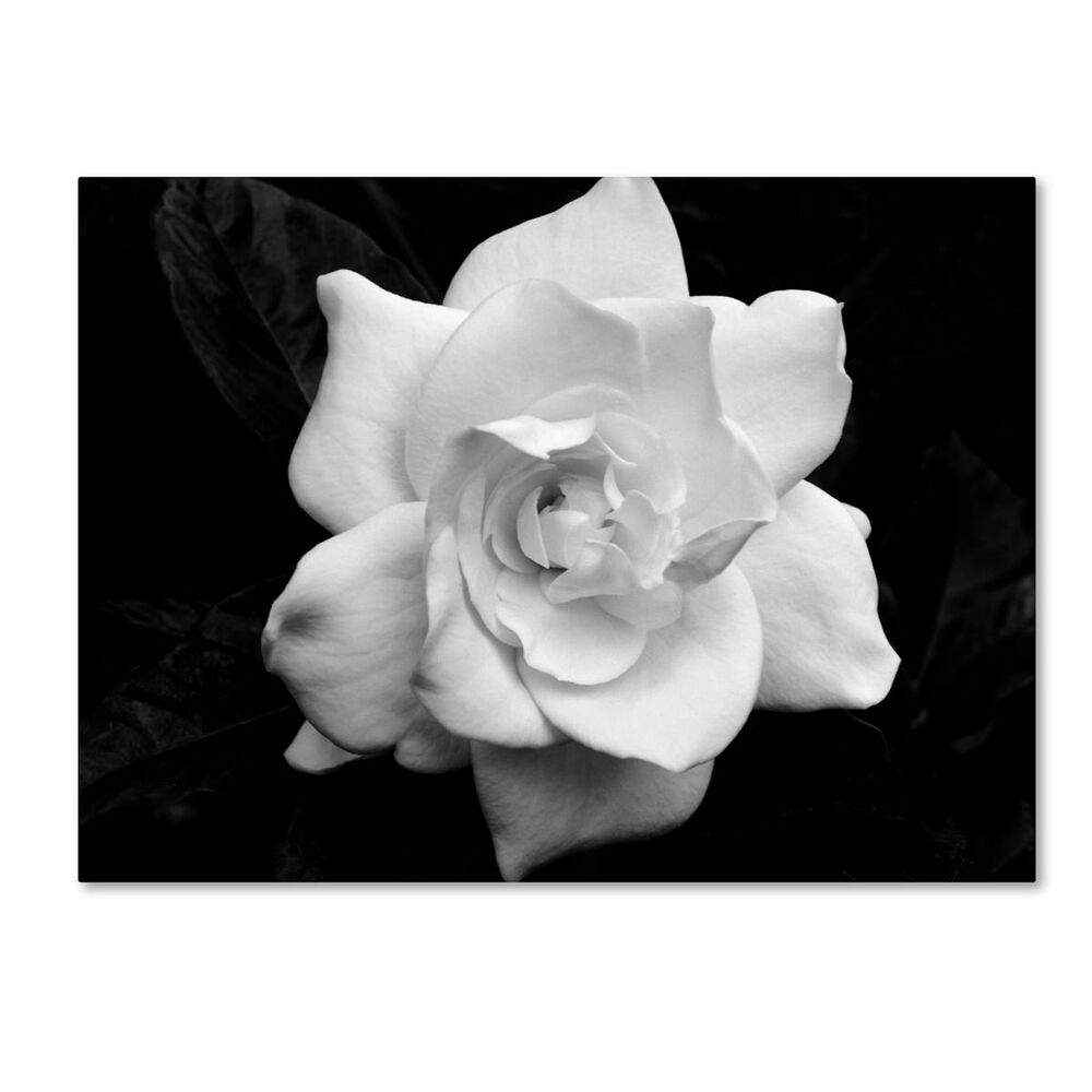 "Timberlake 18"" x 24"" Gardenia in Black and White Canvas Art, , large"
