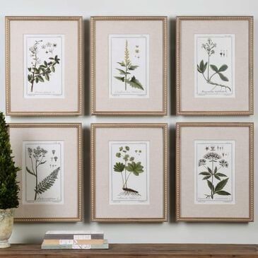 Uttermost Botanical Study Prints (Set of 6), , large