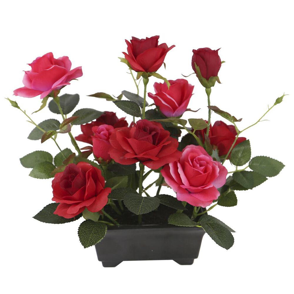 """National Tree 10"""" Assorted Roses in Pot, , large"""