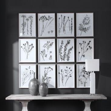 Uttermost Contemporary Botanicals Framed Prints (Set of 12), , large