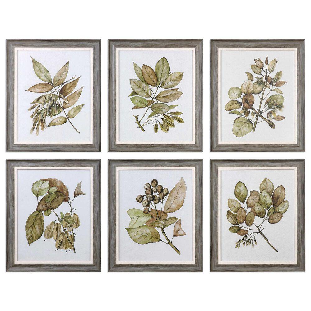 Uttermost Seedlings Framed Prints (Set of 6), , large